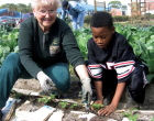 Community Gardens Made Safer From Invisible Toxic Lead